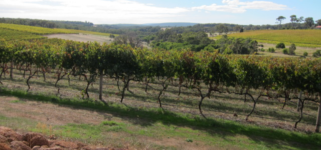 Terroir today: The taste for the particular and the making of good taste