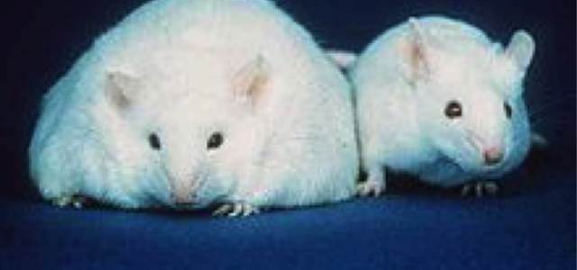 "Epigenetics, Rats and Foetal Programming: Making the ""Good Enough"" 21st Century Mother"