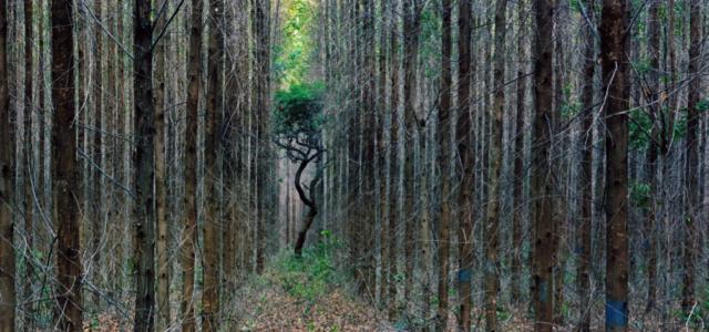 The New Hardwoods of Brazil