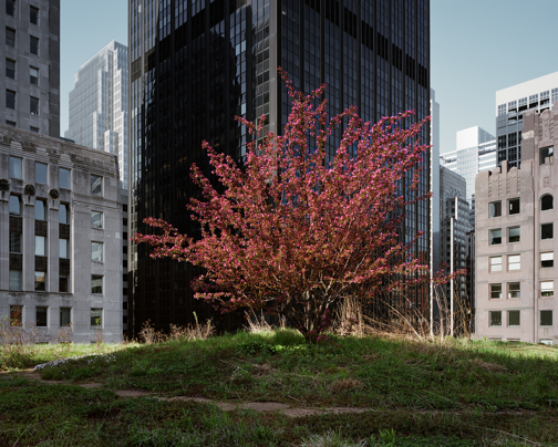 City Hall (looking Southwest), Chicago IL, May 2010