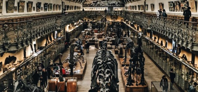 Engines of Knowledge: The Museum and the Exhibit